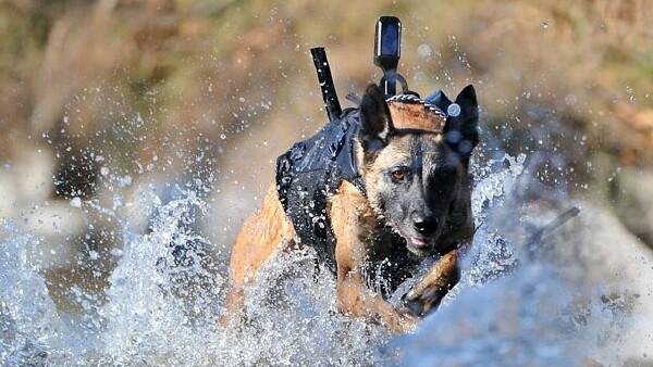 Xbox_dog