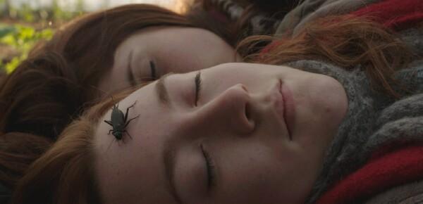 bugs_love_vampires