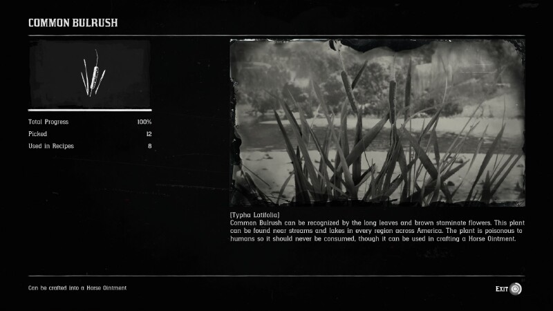 Tips, tricks, and suggestions for the novice Red Dead Redemption 2